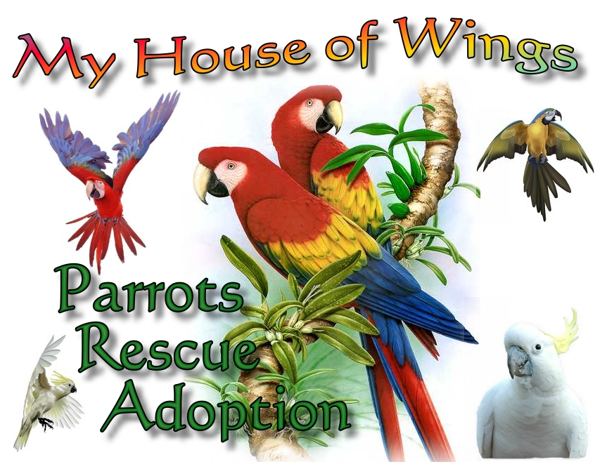 My House of Wings Logo 2009